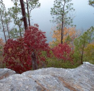 Deadening Trail 9