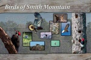 Smith Mountain - Birds